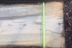 White Oak Slabs